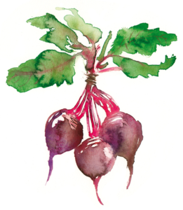 Food sketching and illustration tour in France beet